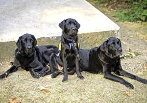 Service Animal Walk-A-Thon Memorial Day Fundraiser for Booster Clubs