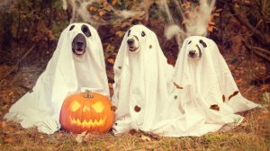 Fun Halloween Dog Photo Fundraiser Planned in advance