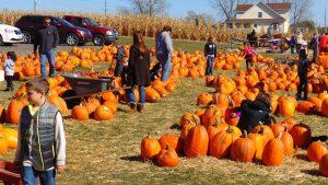 Halloween Pumpkin Patch Fundraiser for Booster Clubs