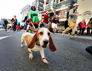 Dog with Antlers during Reindeer Run
