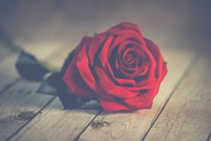 Red rose is traditionally given on Valentines Day